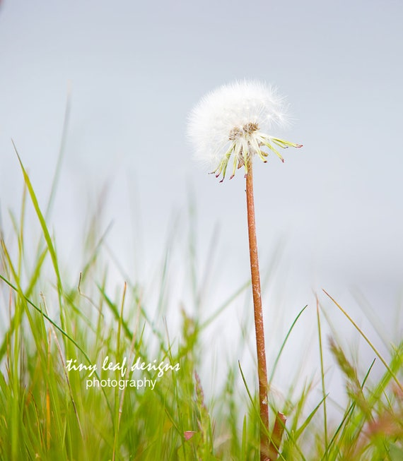 Beach Wish Stick Original Photography Limited 8 x10 matted 11x14