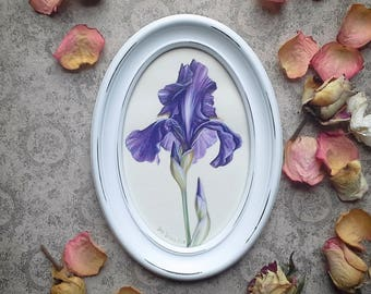 Violet Iris drawing, Botanical painting,  Iris painting, floral painting, flower picture, wall art, botanical framed  picture