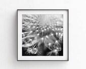 Dandelion art, Black and white wall decor, fine art photography, Dandelion print, Printable art, Nursery wall decor, Commercial use, 12x12