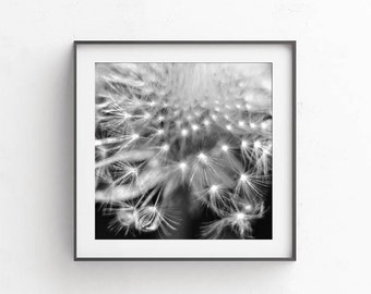 Dandelion art, Black and white wall decor, fine art photography, Dandelion print, Printable art, Nursery wall decor, Commercial use, 12x12