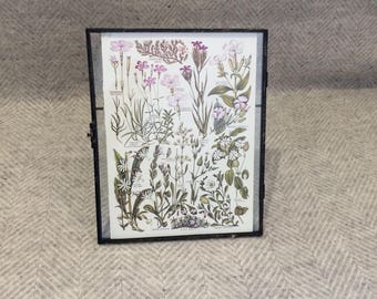 Genuine vintage framed botanical drawing, flower illustrations, botanical print, floral, in glass frame, Green leaves Pink