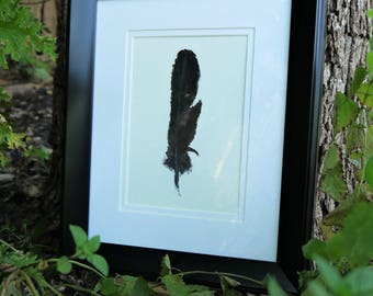 American Crow feather in oil pastel (matted & framed)