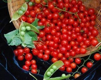 100 Small Cherry Tomato Seeds