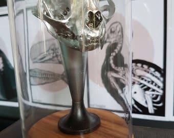 Cat skull bell jar