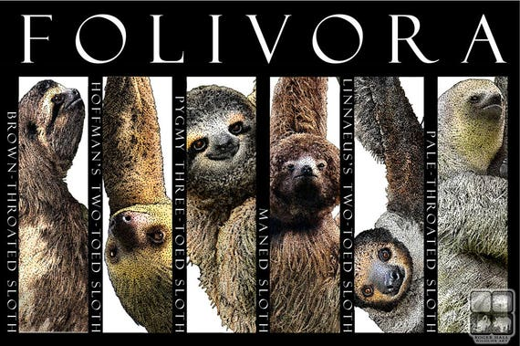 Sloths of the World