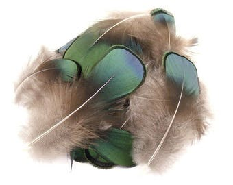 Pack of 100 Natural Lady Amherst Plumage Feathers 1 Inch Arts and Crafts Projects Steamed Sanitized
