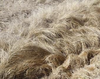 Dune grass print