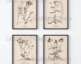 Set of 4 prints, Botanical print, Set of 4 wall art, Wall art set, Botanical art, Botanical illustration, Antique botanical print,  JPG