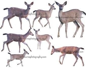 7 real black tail deer , png files, png overlays, Transparent overlays, High Res, Black tail Deer cutouts, instant download,deer, png