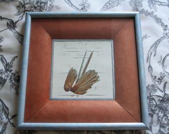 Frame pheasant alphabet series