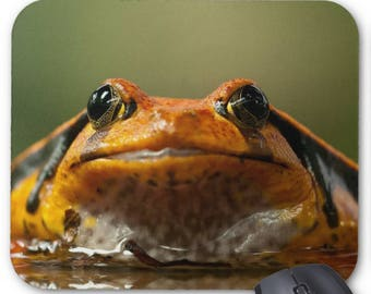Frog Photo Mousepad - Ready for Fun Frog - Mouse Pad