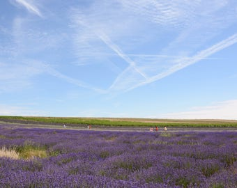 Lavender Fields photo print with white border