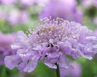Purple Flower Print #129
