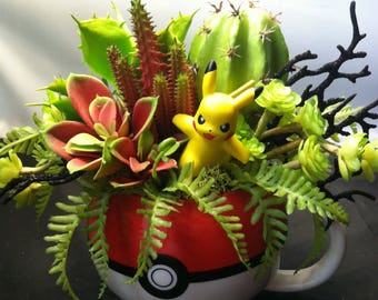 Pokemon succulent arrangement