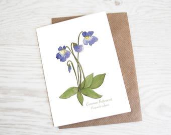 Common Butterwort, Botanical Wildflower Print, Greeting Card