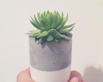 Concrete cement cactus succulent pot