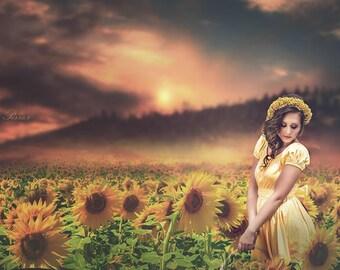 Sunflower Field Digital Background