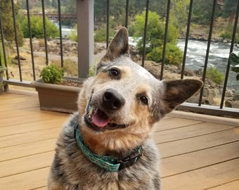 Fun geometric green, blue, and white pattern dog collar
