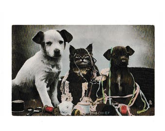 Rare Tuck's RPPC photochrome postcard Mischief 1907 Cats and Dogs, unposted unused,  collectable antique postcard