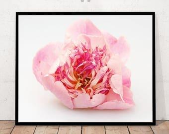 Peony Print, Peony Photography, Minimalist Photography, Flower Photography, Flower Print, Peony Art, Flower Decor, Peony Wall Art, Paeony
