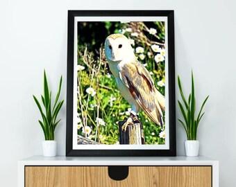 Digital oil painting of owl