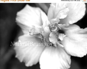 ON SALE NOW Black and white flower print, fine art photography, flower photography, nature photography, garden, nature, print, floral wall a