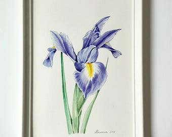 Blue Iris painting Flower watercolor Original watercolor  Botanical illustration  Blue flower painting