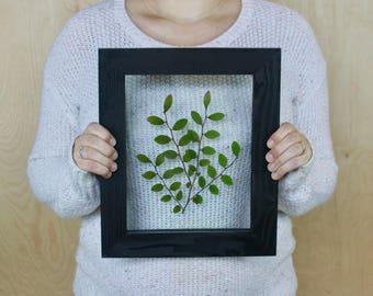 Framed Herbarium, Pressed Botanicals, Northwest Wall Art, Green Natural Decor, Minimalist Style, Specimen Art, Gallery Wall, Art Under 100