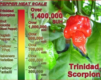 Hot Chilli Pepper - Trinidad Scorpion Red (5 SEEDS)