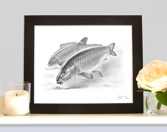 Heads Down Common Carp Limited Edition Fish Art Print Picture