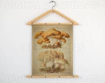 Large art poster, Botanical poster, Dictionary print, 8x10 print vintage, 11x14 art print, Antique mushroom, 16x20 download image, JPG image