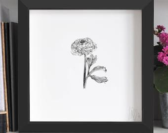 Ranunculus Flower Print