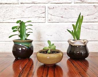 Set of 3 Mini Succulent & Cactus Planter Pot Arangement/Display