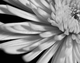 Black & White Flower Series 2 - Aluminum Print