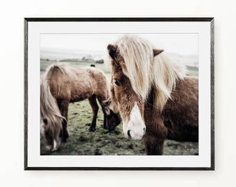 Horse Print, Horse Photography Wall Art, Horse Photography, Horse Digital Print Instant Download, Icelandic Horse Wall Art, Equestrian Photo