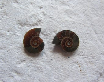 Ammonite. 2 Pcs. S0586