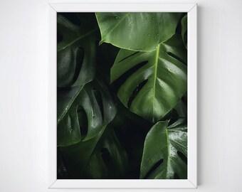 Monstera Leaves Poster, Botanical Wall Print, Monstera Leaves Wall Art, Botanical Wall Art, Green Leaf Print, Monstera Photography