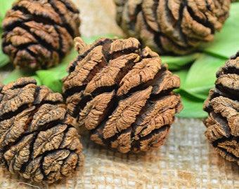 Sequoia Cones | Sequoia Pine Cones | Pine Cones | Natural Pine Cones
