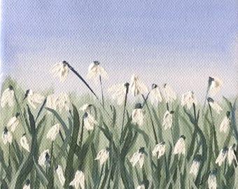 Delightful Spring Snowdrops