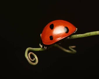 Lady Bug Print