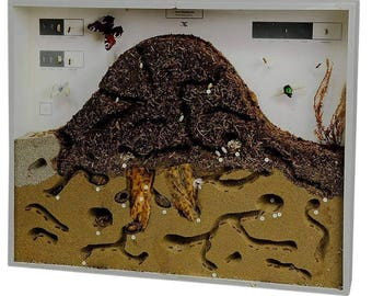 school teaching display anthill of the red wood ant