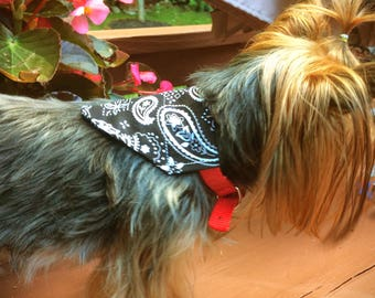 Black Paisley Bandana Small