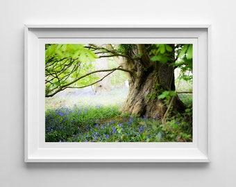 Woodland Bluebells, Original Photography Print, Tree, Flowers, Landscape, Wall Art, Decor