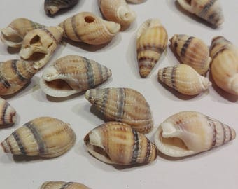 Set of 25 small shells of Brittany grey/beige