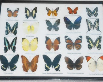REAL 20 Butterflies Wall Decor Housewares Collectible TAXIDERMY Framed /BTF13A