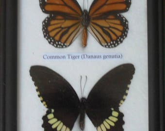 REAL 2 BEAUTIFUL Butterfly Collection In Frame BF02T