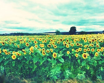 Sunflower Field Fine Art Photograpy Download or Custom Photo Print - Charante France - Printable Art - Sun Flowers Art - Field of Sunflowers