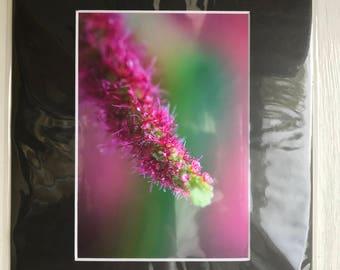 Floral - Pink Prickles
