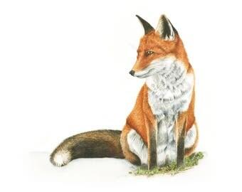 Mr Fox - Limited Edition Giclee Print