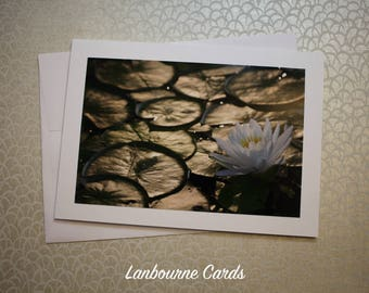 Water Lily 2 Notecard